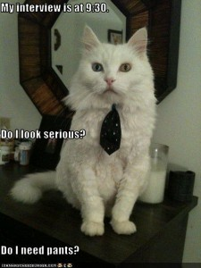 While his fashion sense is questionable, this smart kitteh has a CV!