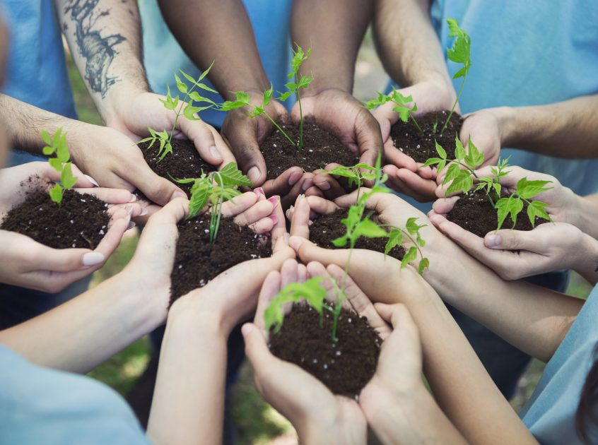 Several cupped hands holding sprouts in dirt